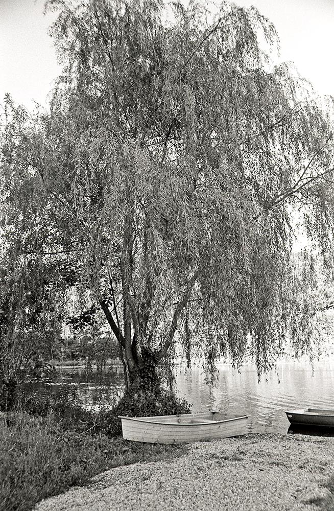 Willow tree at Lake Celeste copy.jpg