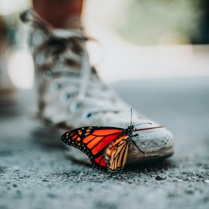 butterflyonshoe.jpg