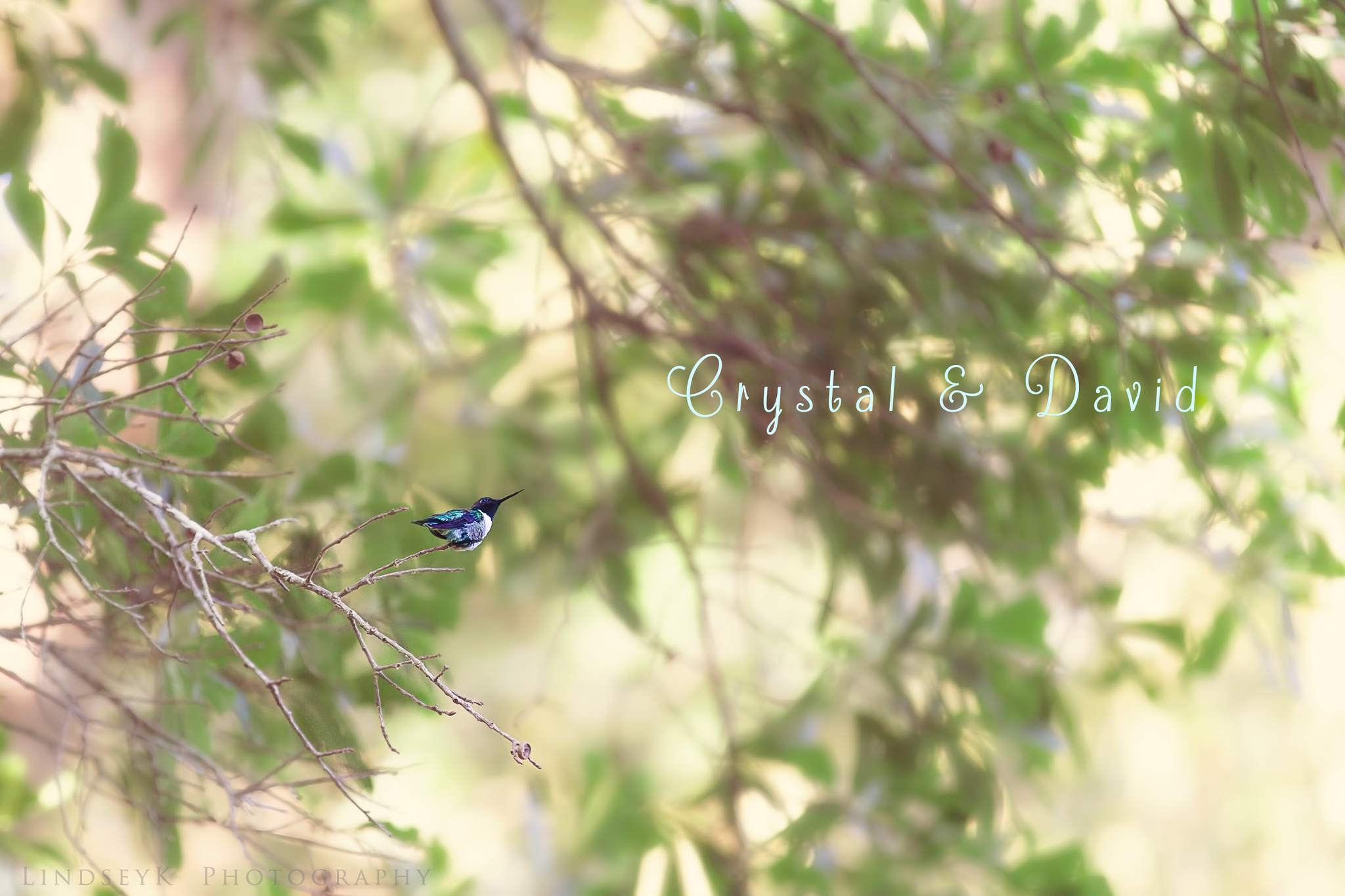 hummingbird-on-branch.png