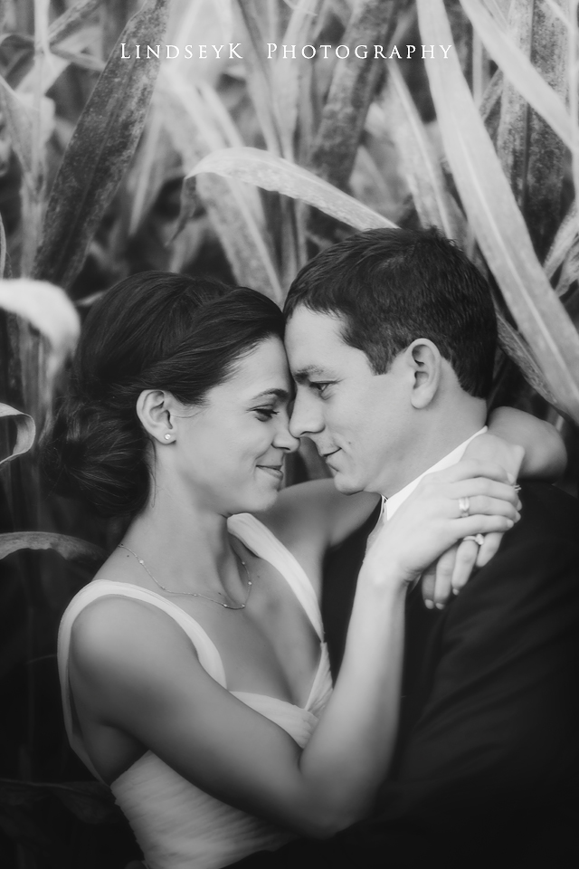 cornfield-wedding.jpg