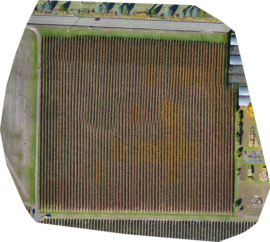 aerial4.jpg