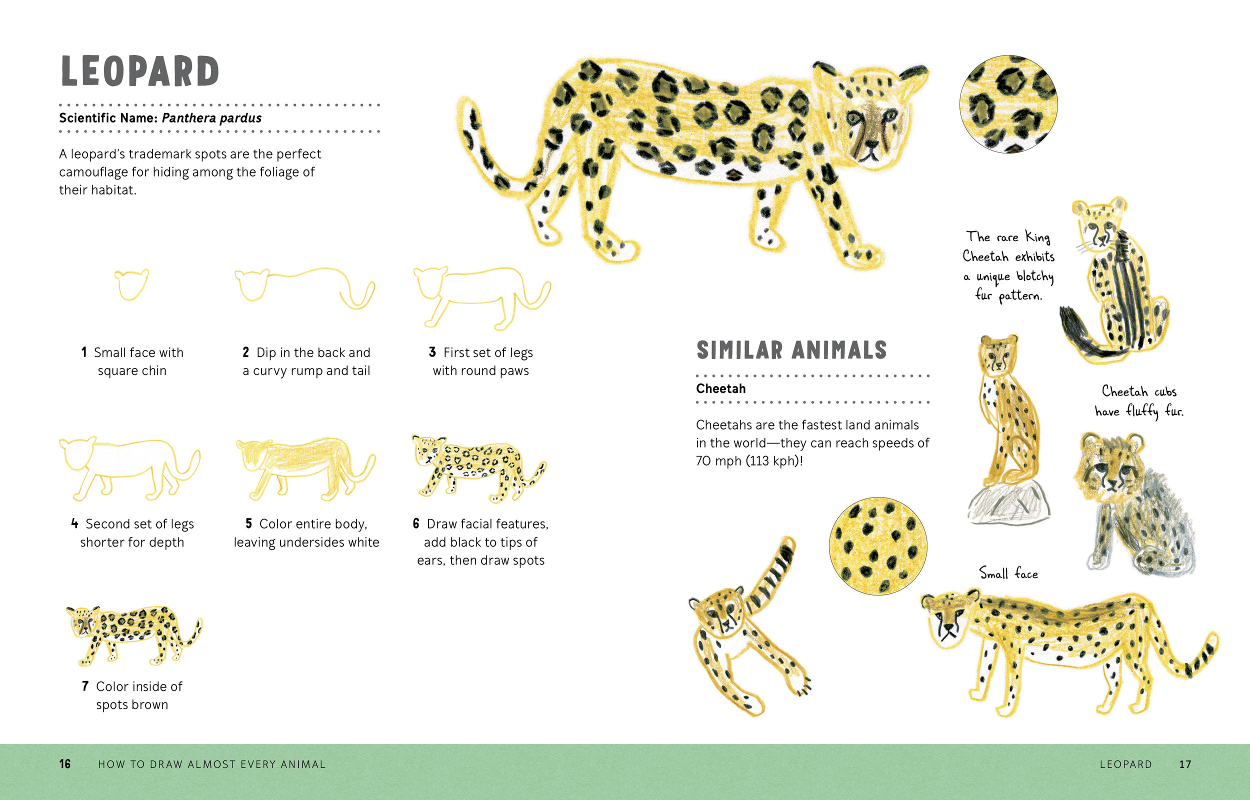 How to Draw Almost Every Animal 16.17.jpg