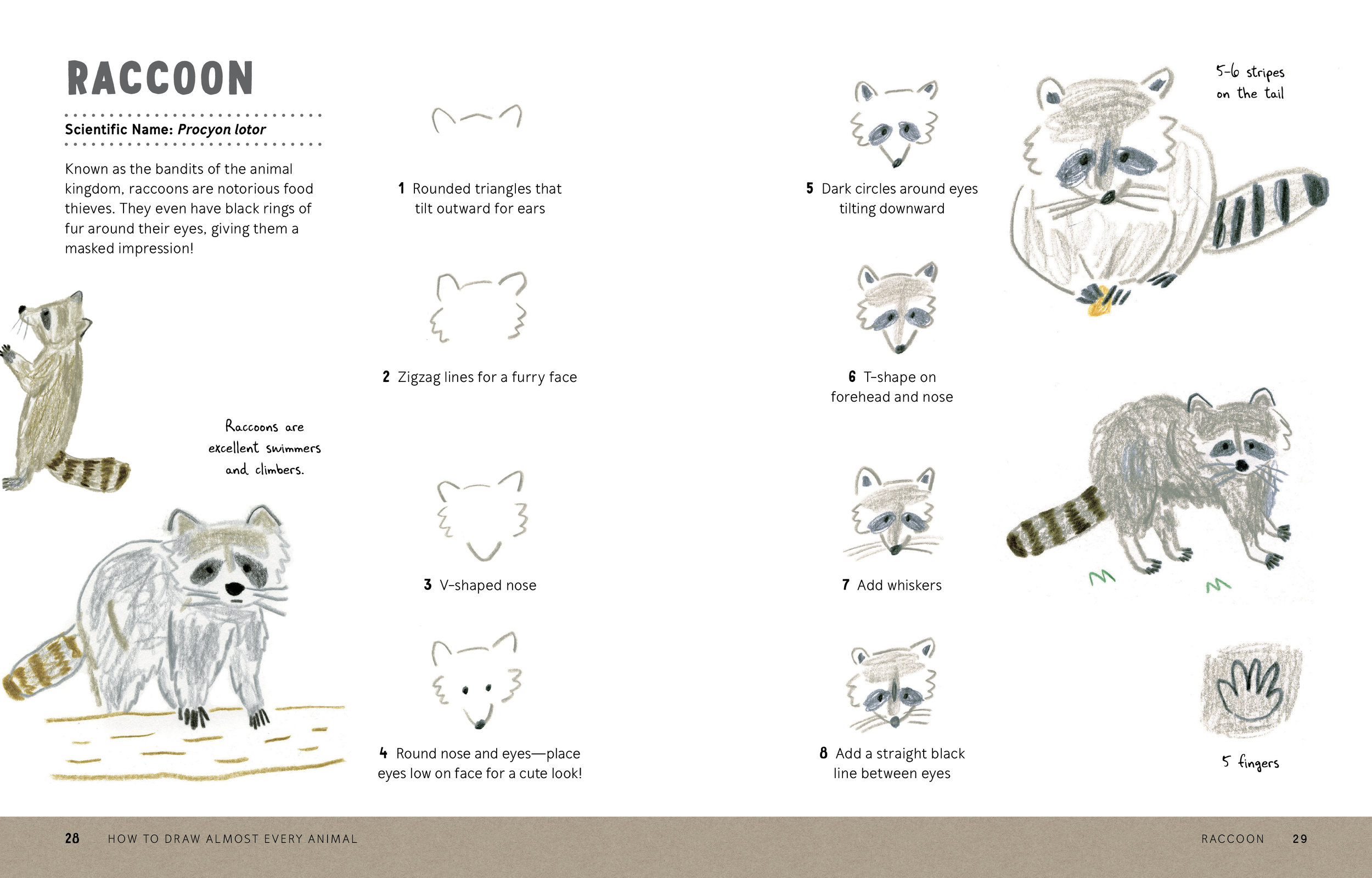How to Draw Almost Every Animal 28.29.jpg