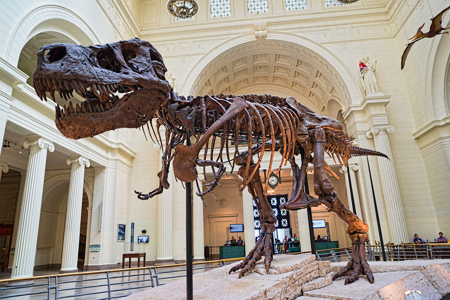 PHOTO: THE FIELD MUSEUM