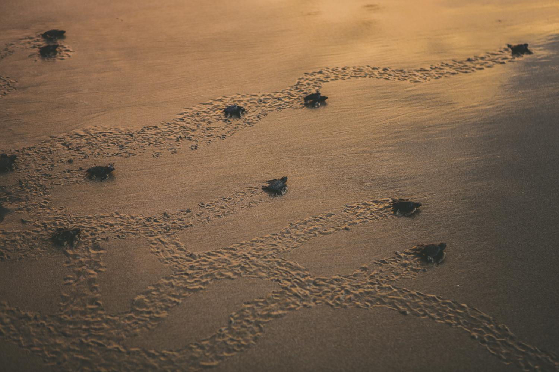 PHOTO: COURTESY OF MUKUL BEACH, GOLF & SPA