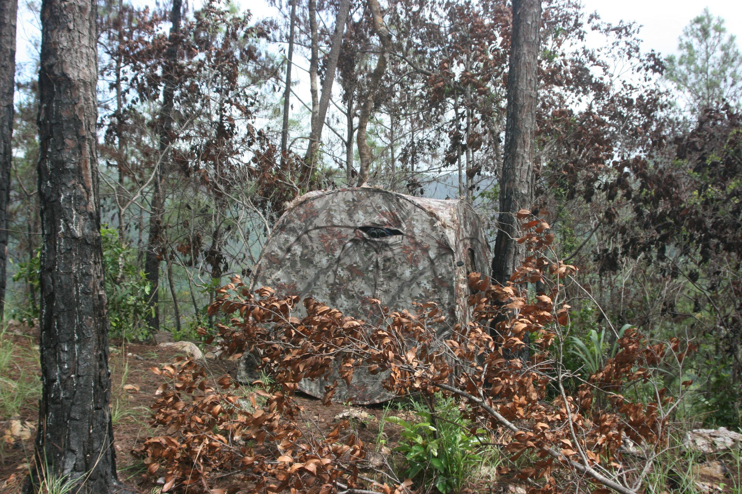 Blind monitoring the Solitary Eagle nest.JPG