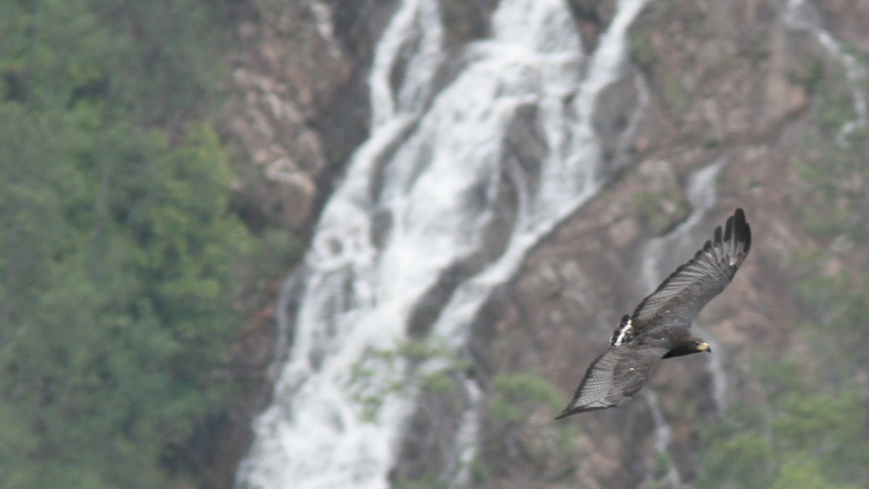 Solitary Eagle waterfall.jpg