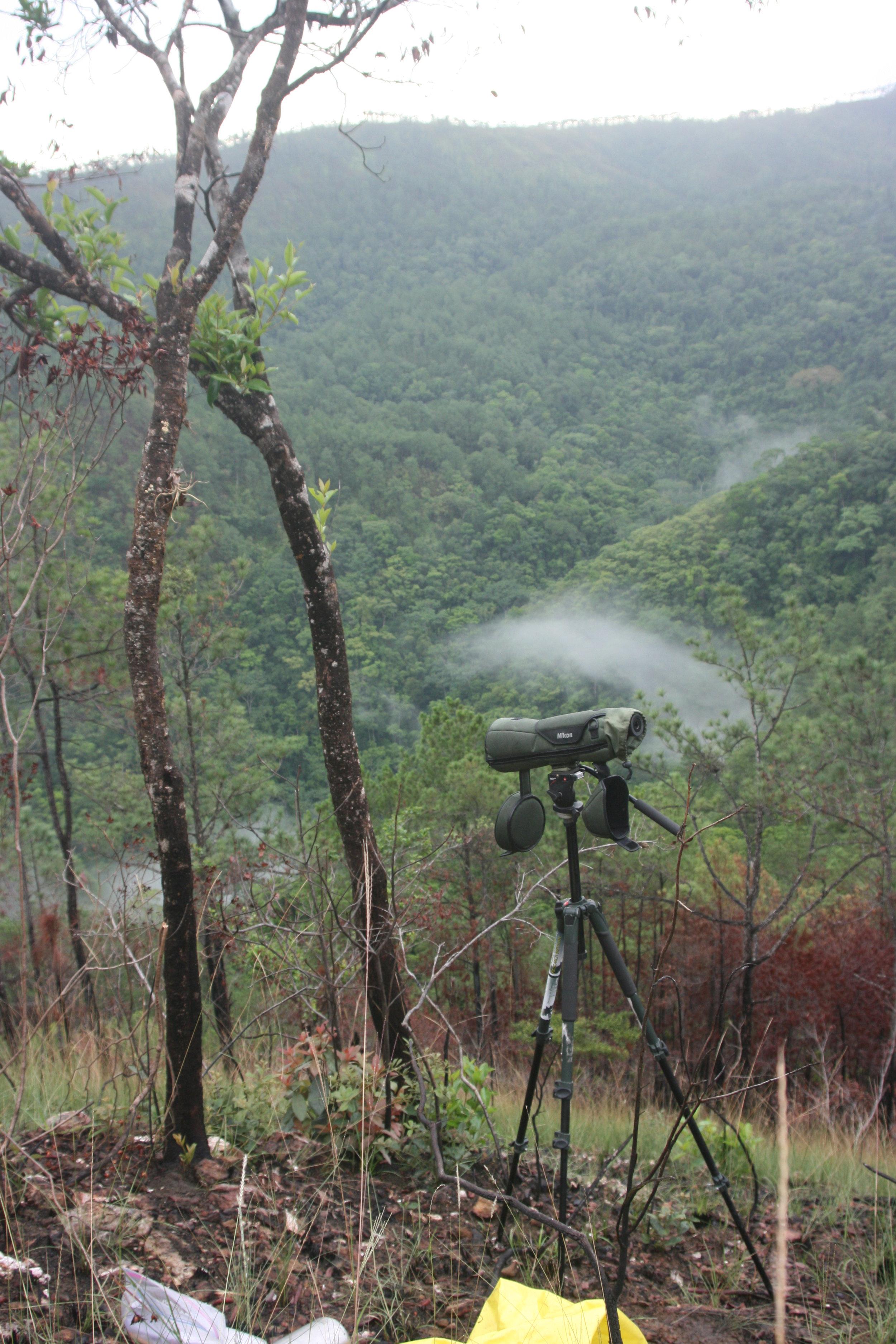Solitary Eagle nesting habitat.JPG