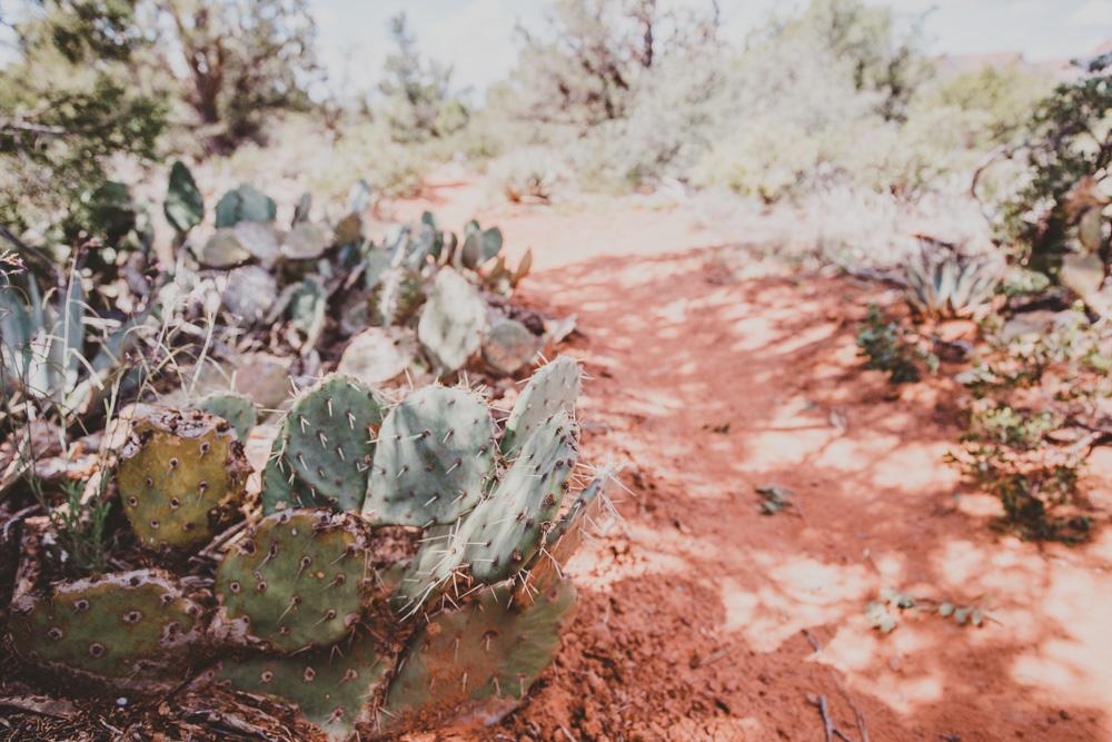 2019_04_06 Arizona 00009.jpg