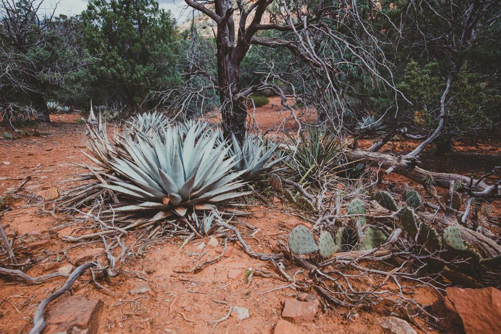 2019_04_06 Arizona 00032.jpg