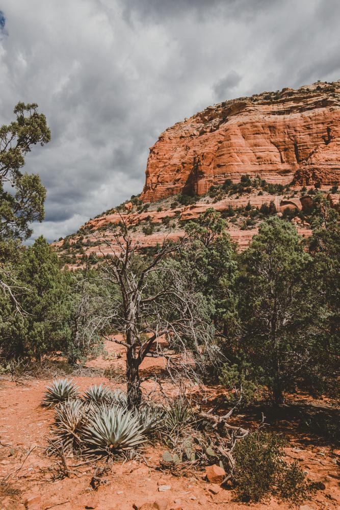 2019_04_06 Arizona 00034.jpg