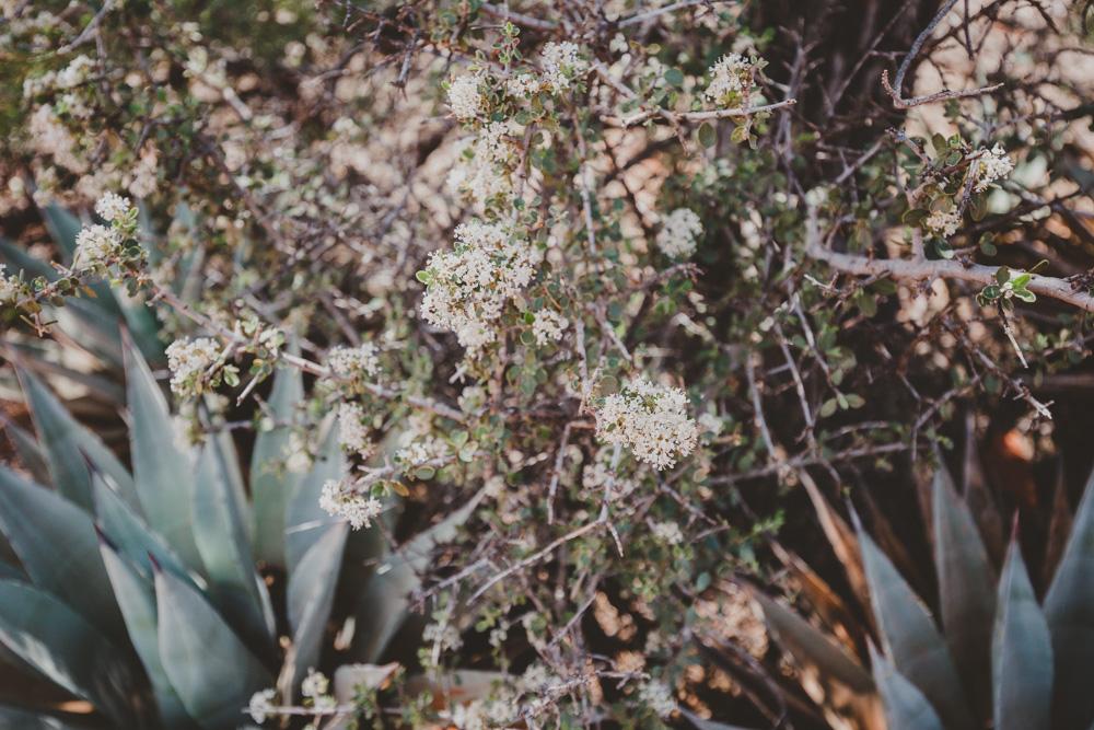 2019_04_06 Arizona 00094.jpg