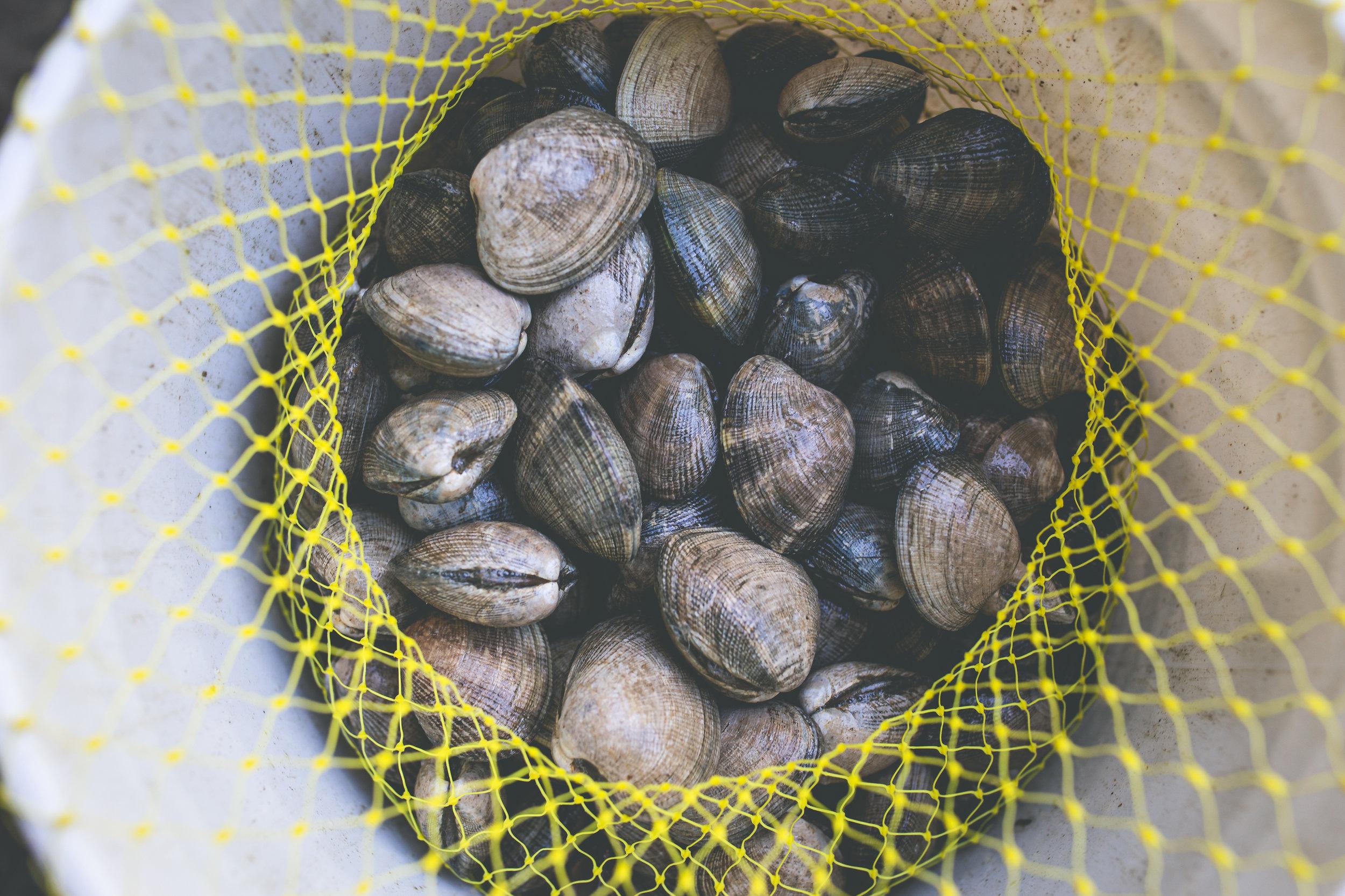 2019_09_18 suquamish seafoods 00396.jpg