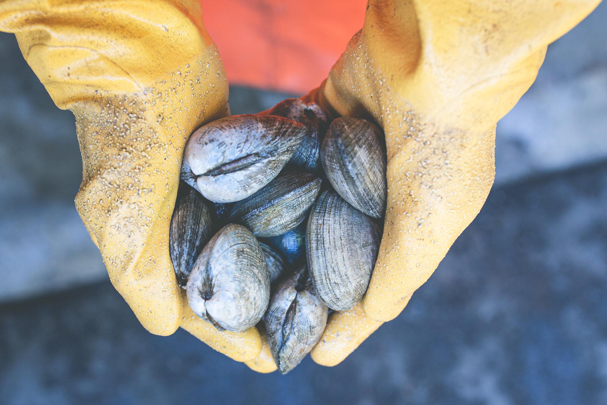 2019_09_18 suquamish seafoods 00443.jpg