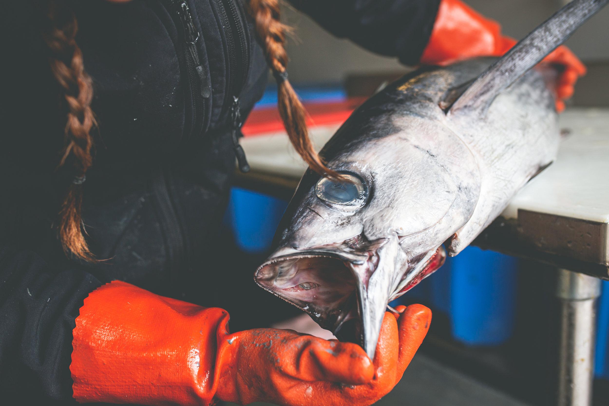 2019_09_20 suquamish seafoods 00125.jpg