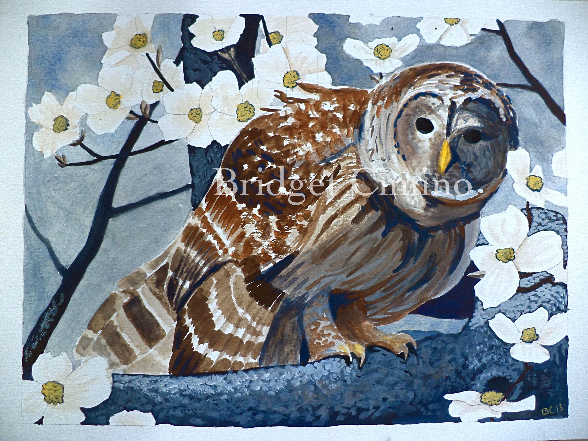 Barred Owl and Dogwood