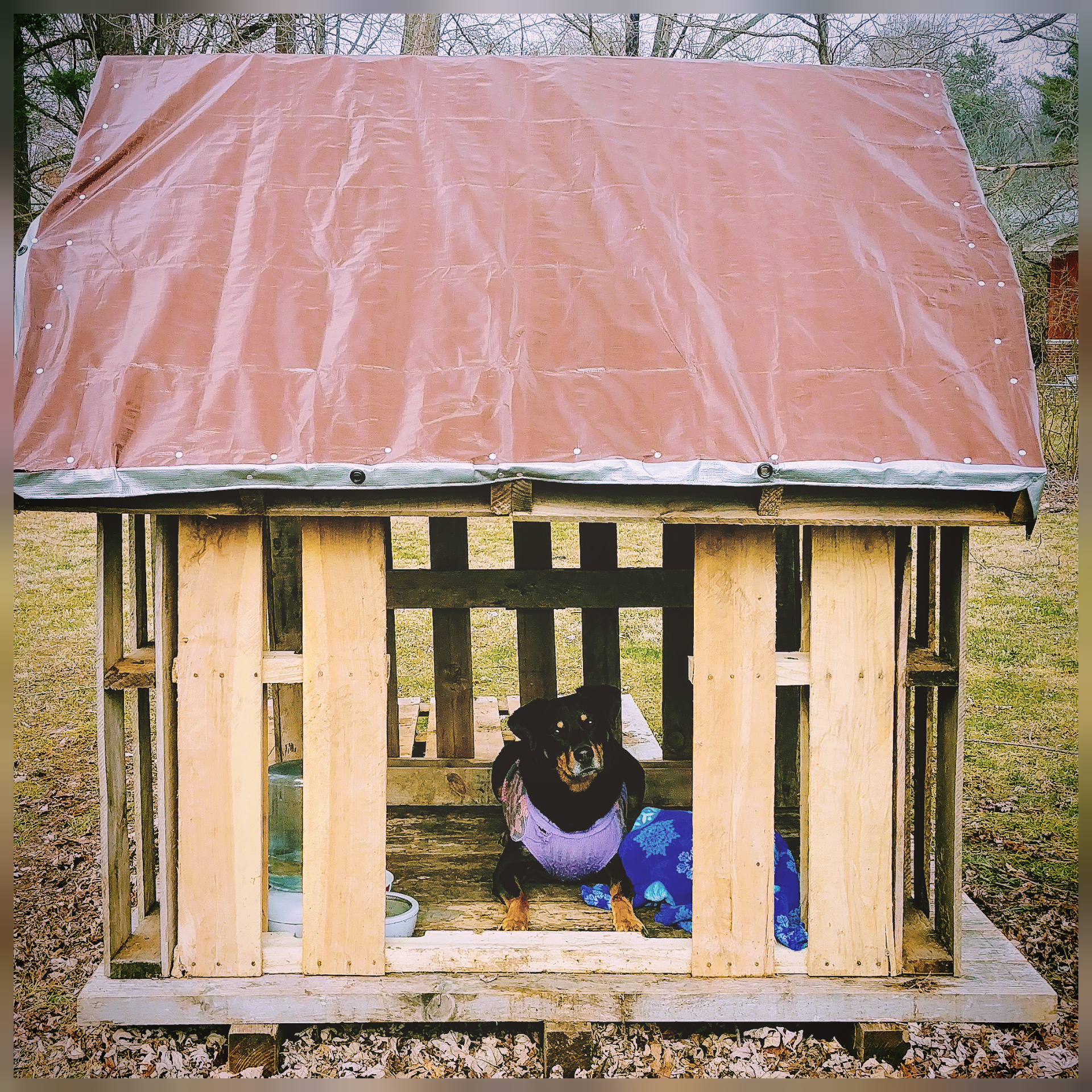 Esri's House - This is a 6x8x6 foot dog house I built using 8 pallets, 2 treated wooden studs, 60 screws, 60 roofing nails, and heavy duty 6x8 tarp