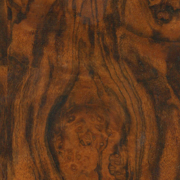 Burl Walnut-Satin