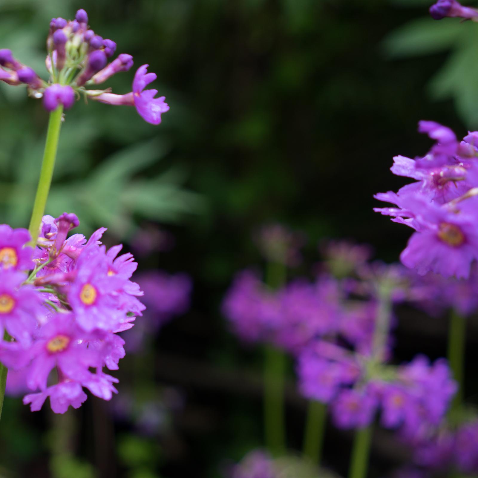 Rêve de Fleurs