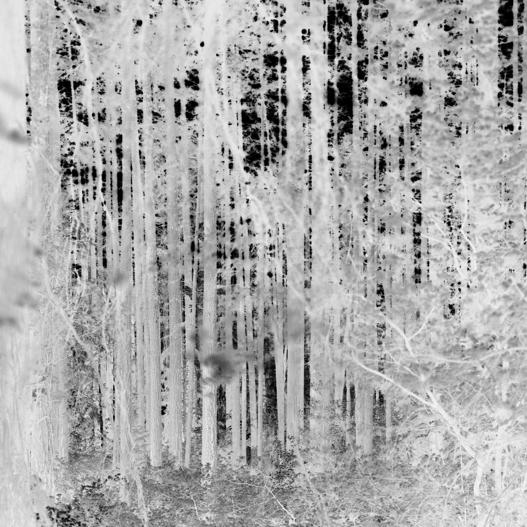 Untitled (  Ithaka 3.2),  2008 /  a  rchival p  igment print  , 40  x 40  inches, edition of 5 plus 2 AP