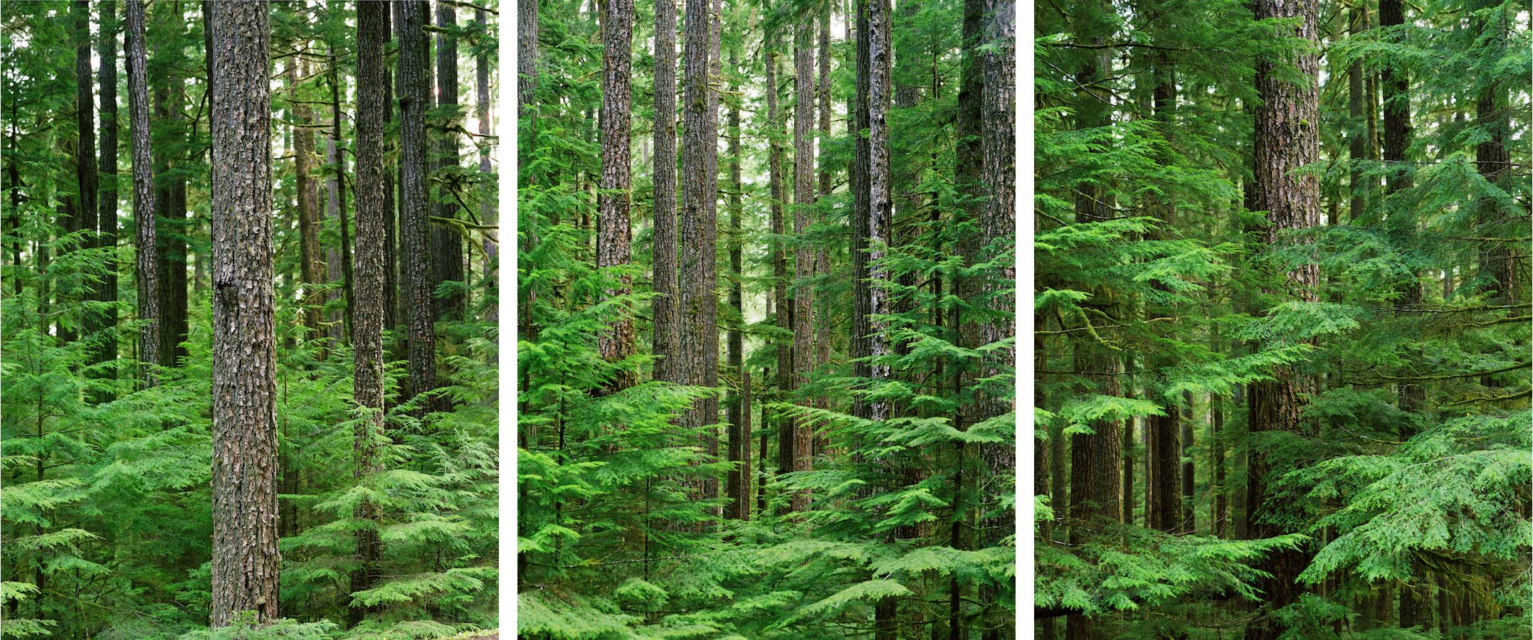 Untitled (  Ithaka   Triptych),  2008 /  a  rchival p  igment print  , 77  x 60  inches per panel, edition of 3 plus 2 AP