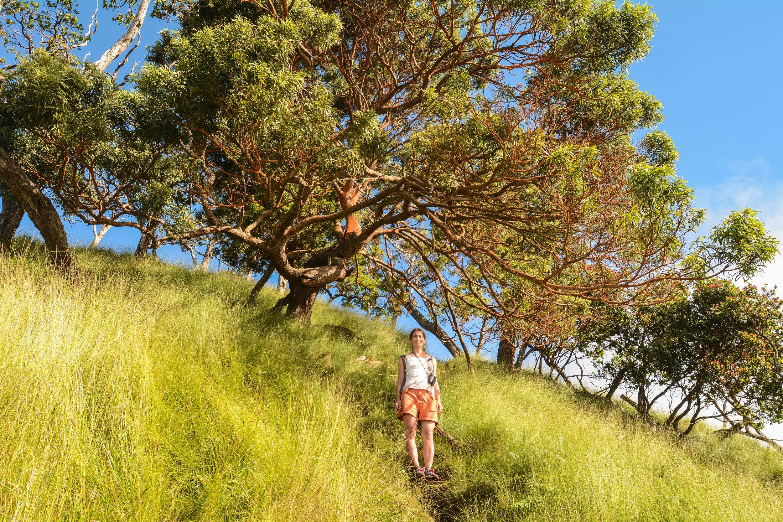 Hiker enjoying the lush beauty of Koke e` state park Kauai, Hawaii
