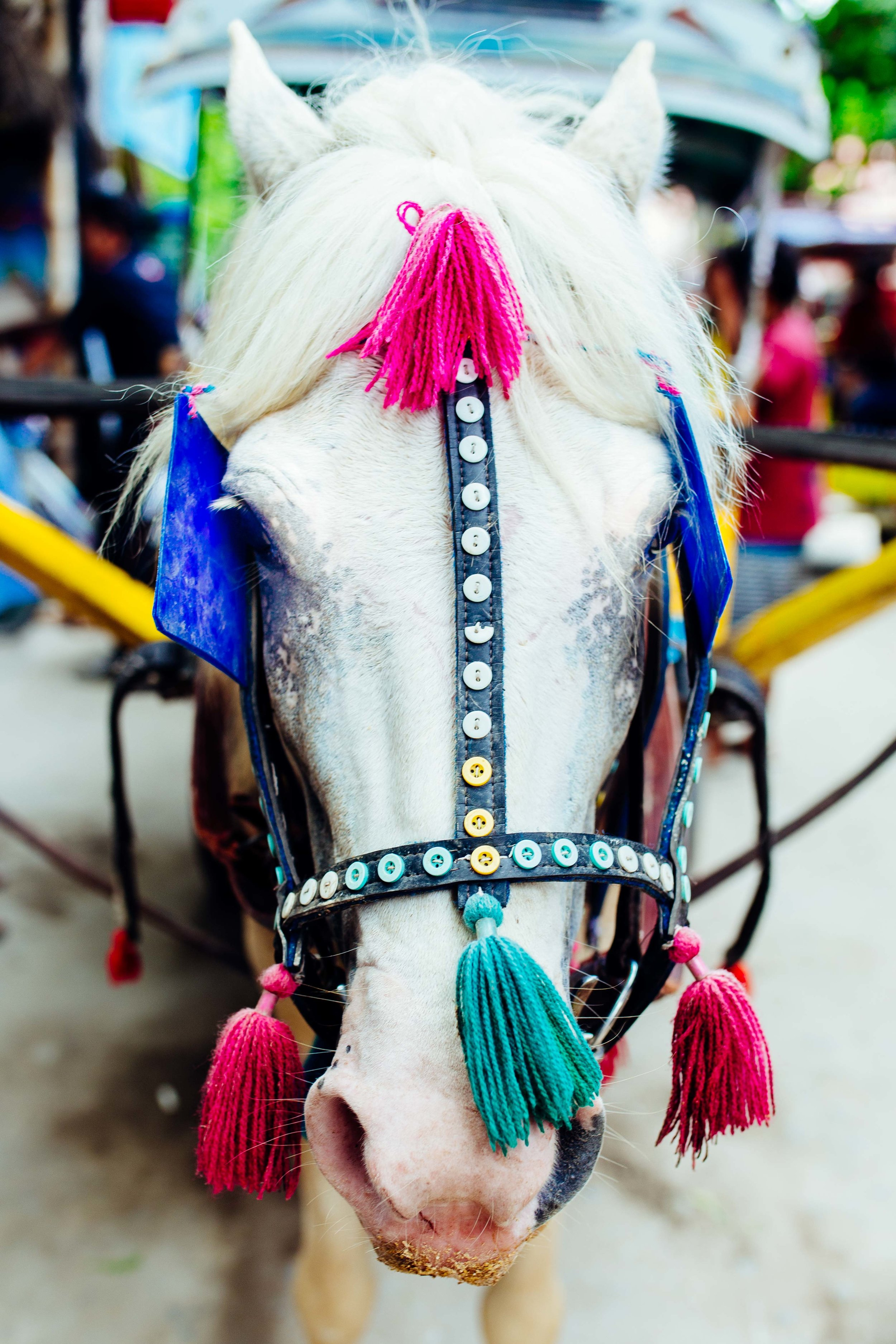 work horse gili T photography