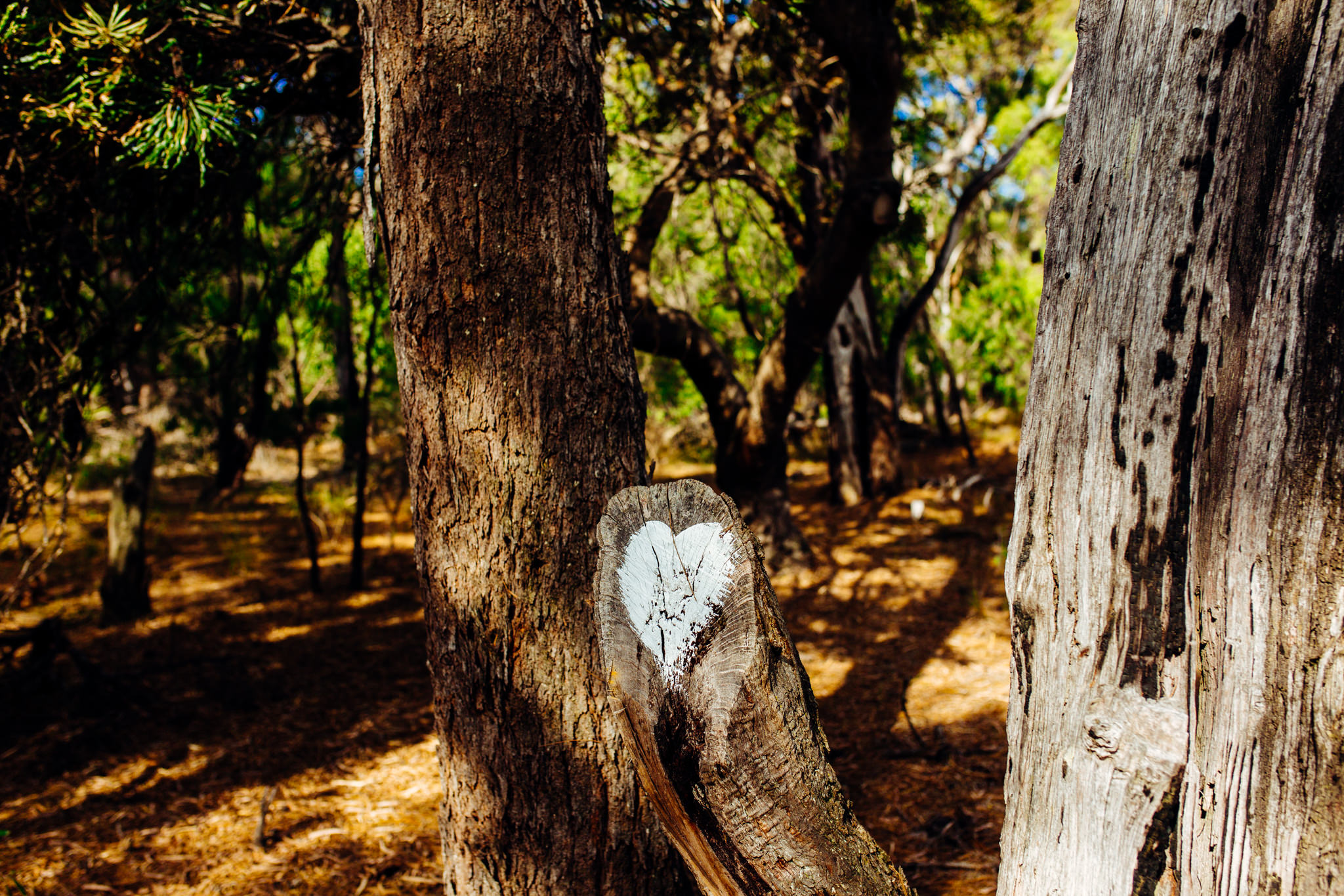 Solitaire Homestead tree heart