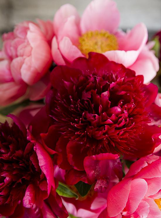 portobellorose-bouquet-detail-bold1.jpg