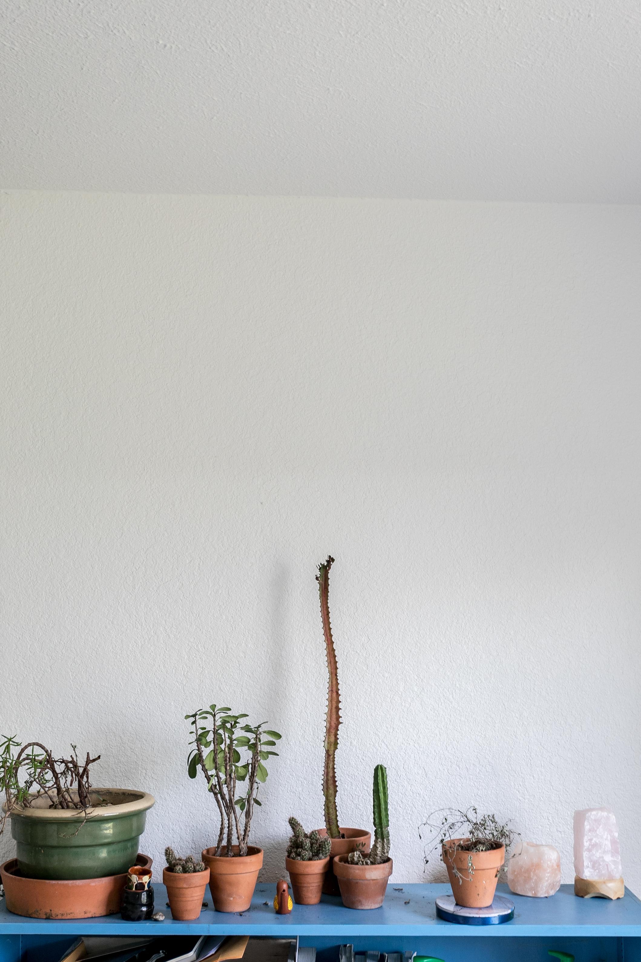Plant Shelf, Sarah Natsumi Moore Photography