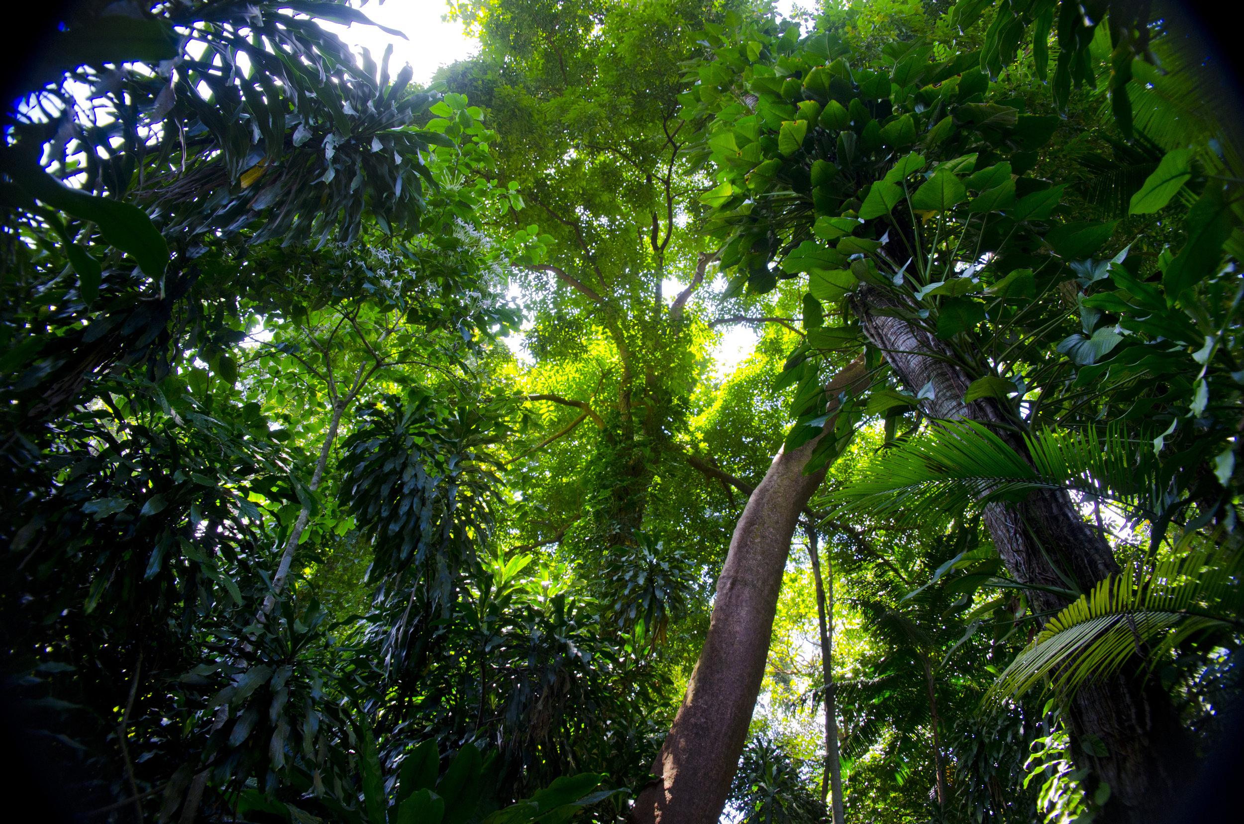 Singapore2012-044.jpg