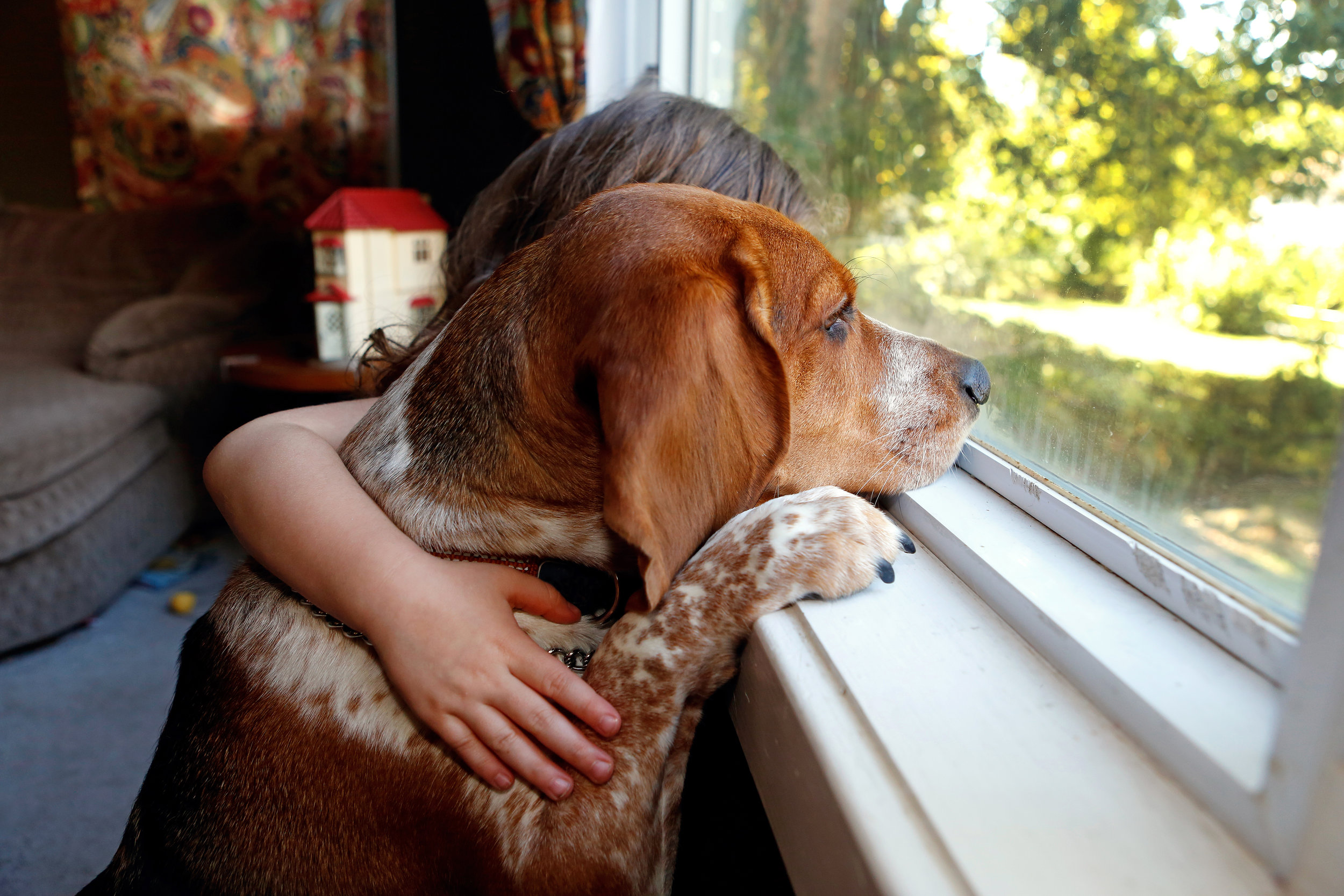 Dog_companion.jpg