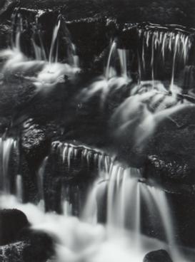 Ansel Adams, Fern, Spring, Yosemite Valley, 1961, Adam Fuss, unique photogram, est. £4,000-£6,000 est. £4,000-£6,000