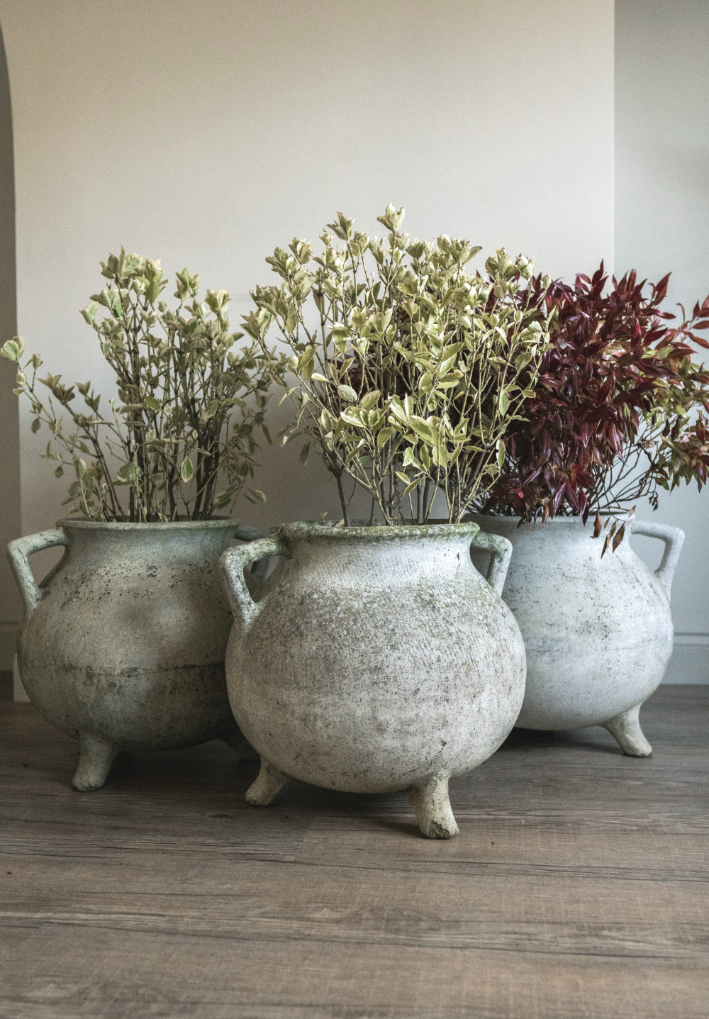 Lovely pot-belly Cauldron planters. Price: £295 each  cotswoldgrey.com