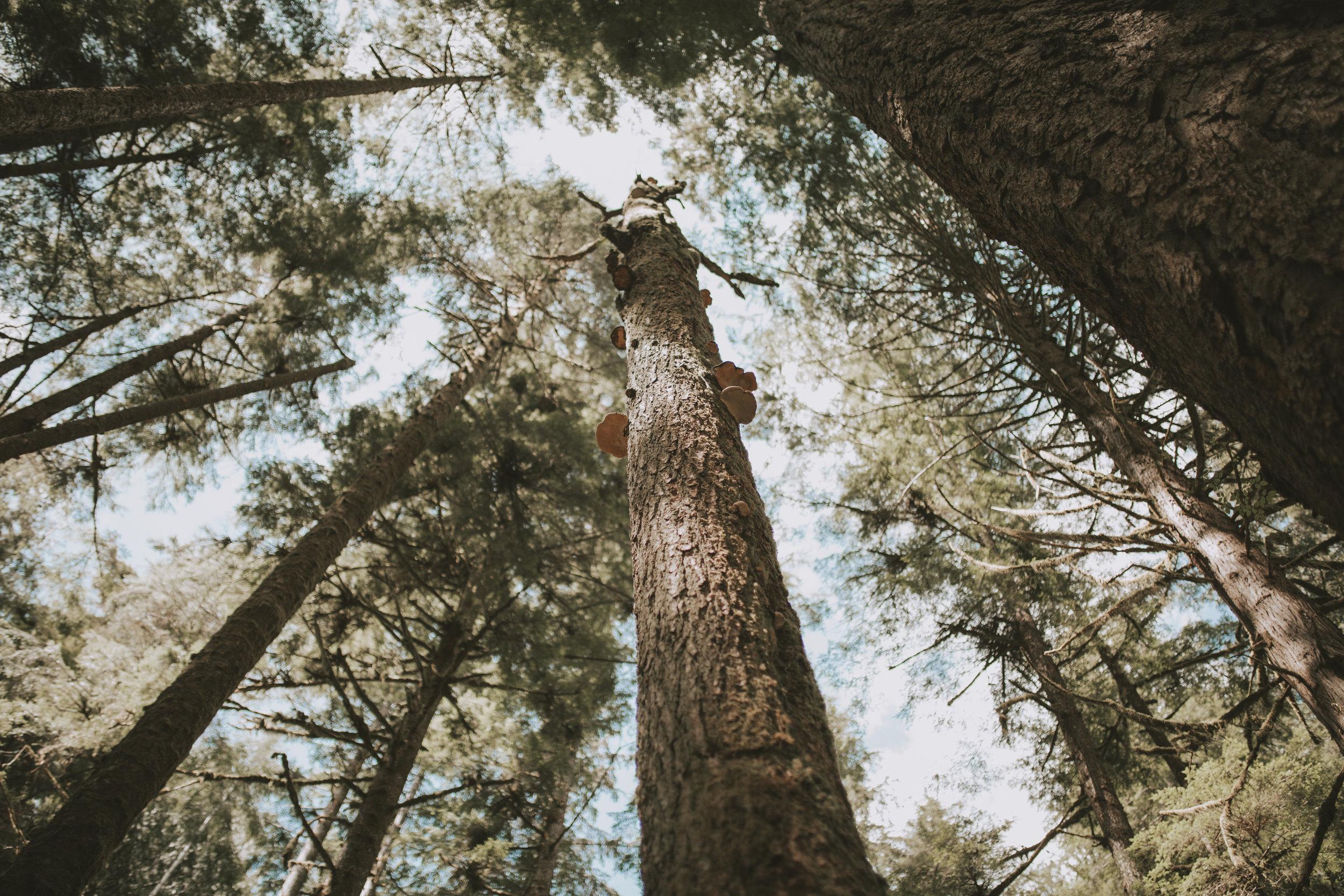 patagonia-2019-emilybeekscreative-14.jpg