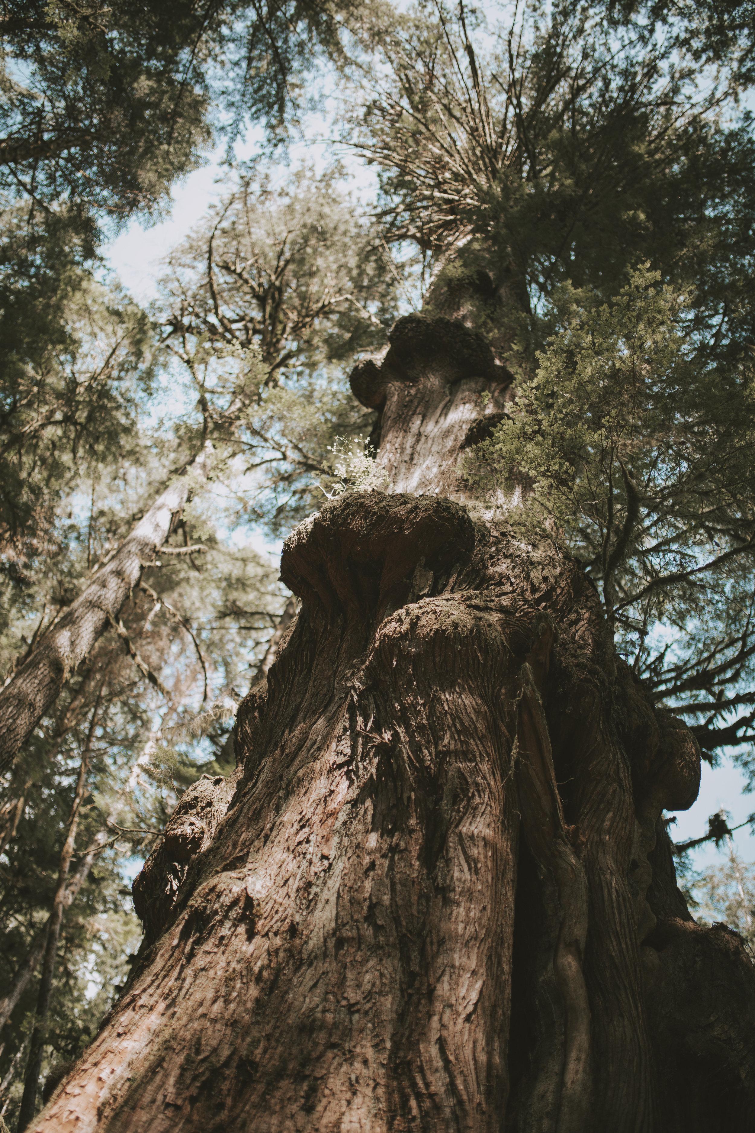patagonia-2019-emilybeekscreative-54.jpg