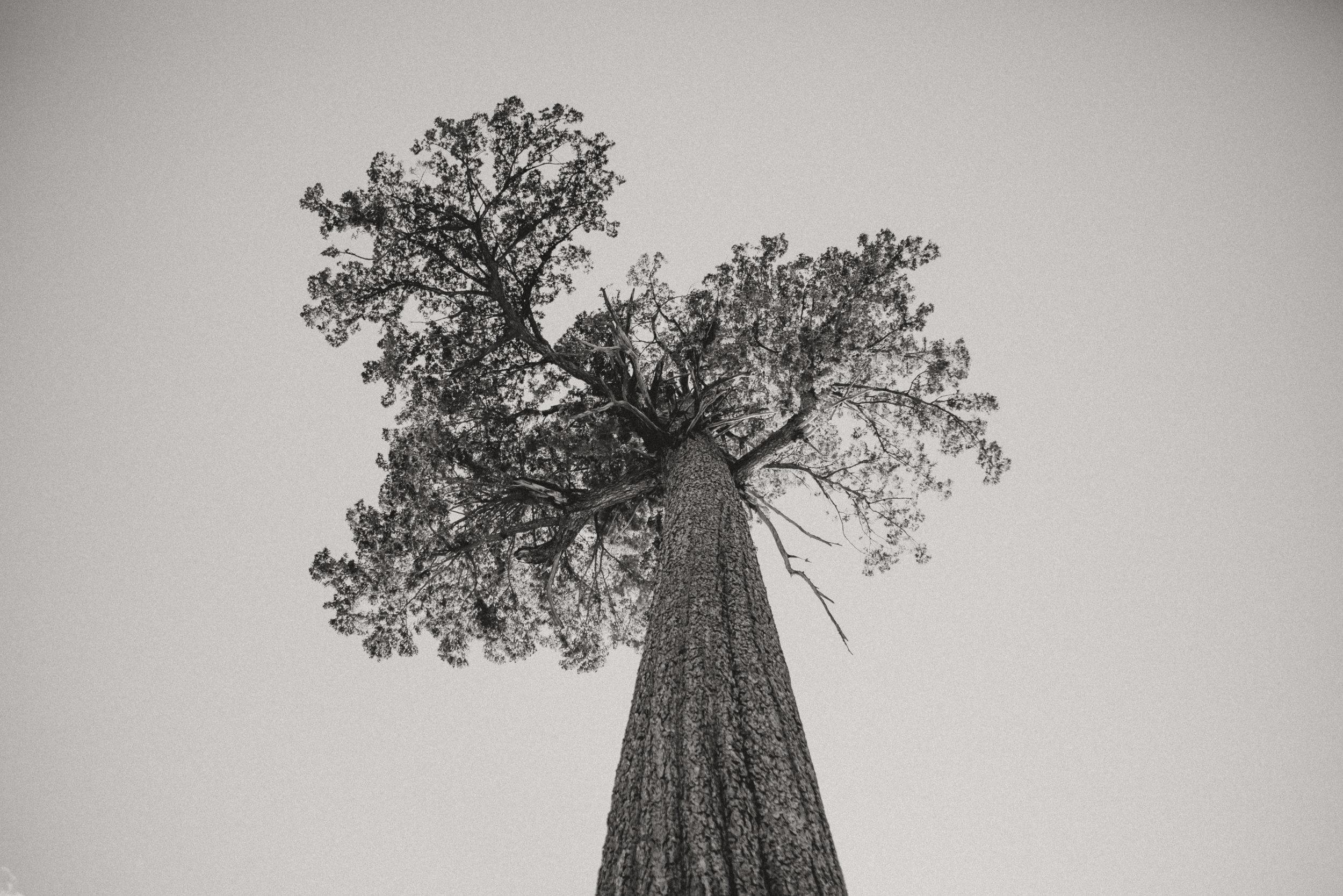patagonia-2019-emilybeekscreative-123.jpg