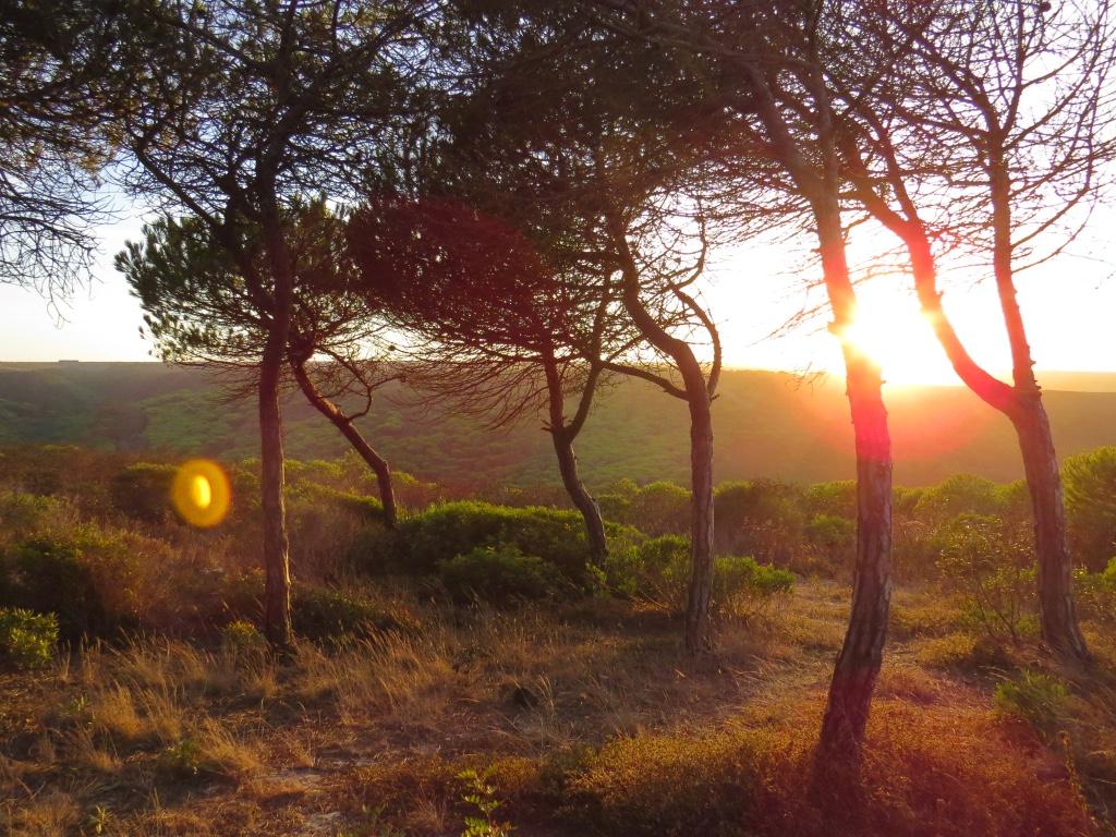 Yoga Retreat Algarve forest
