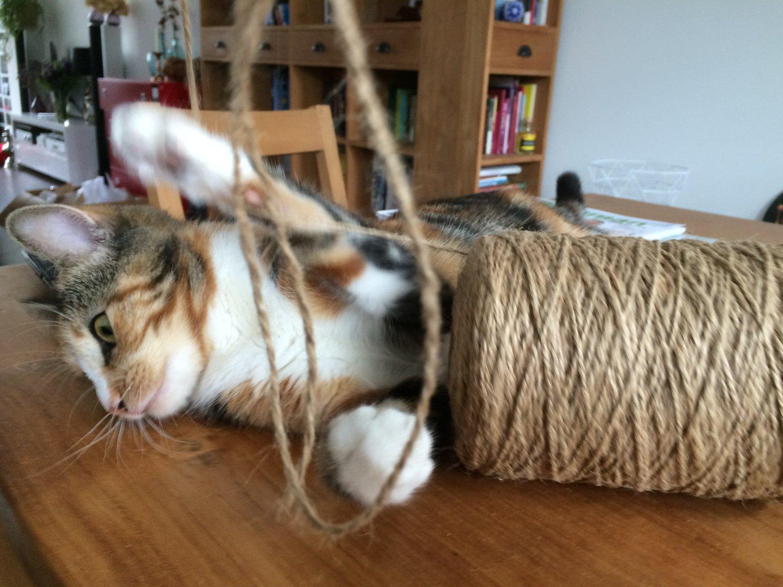 Nala attacks the jute rope