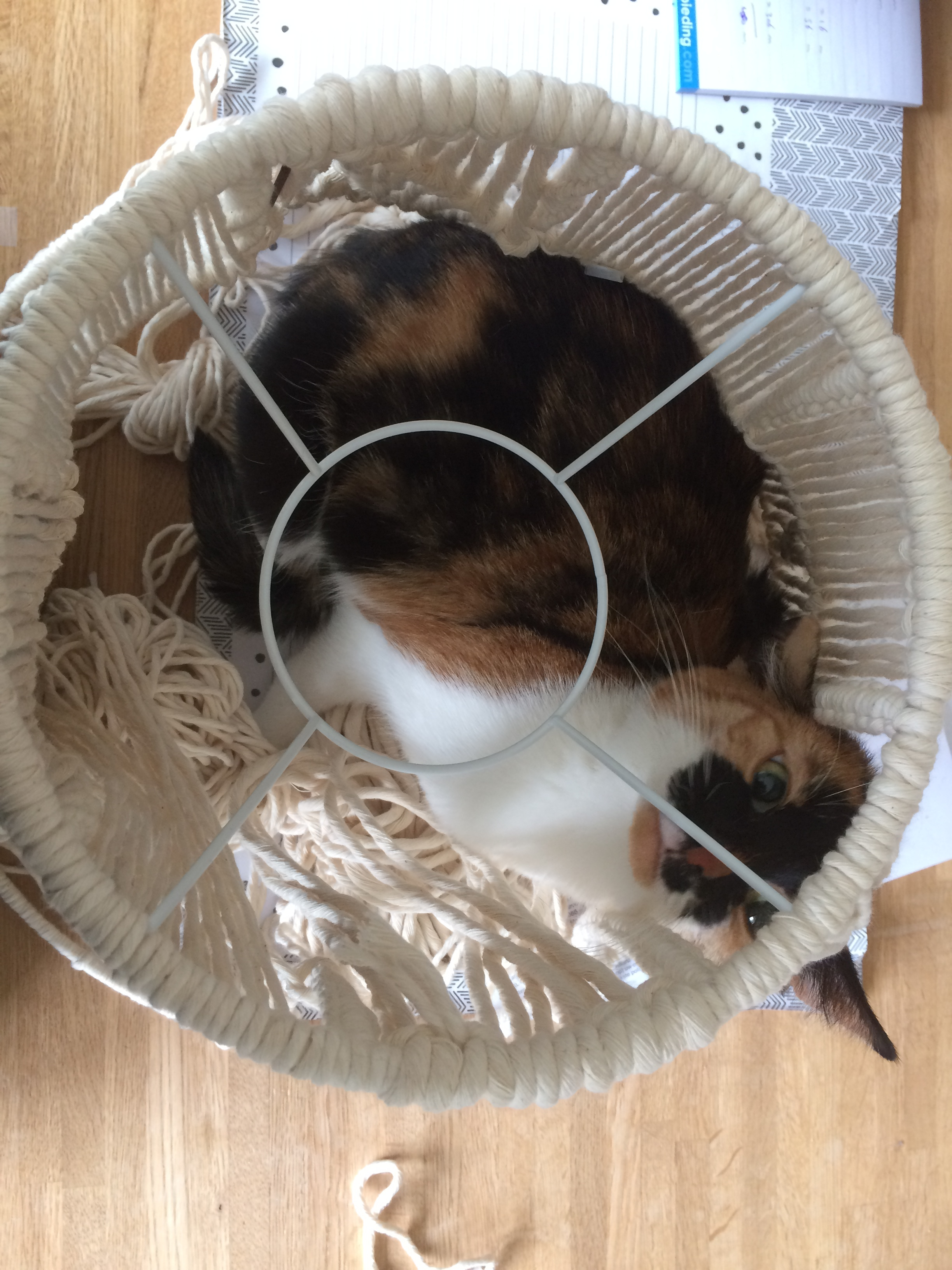 Iza found a nice spot to lay down…. IN the macrame lamp shade that I was making….. sure….!