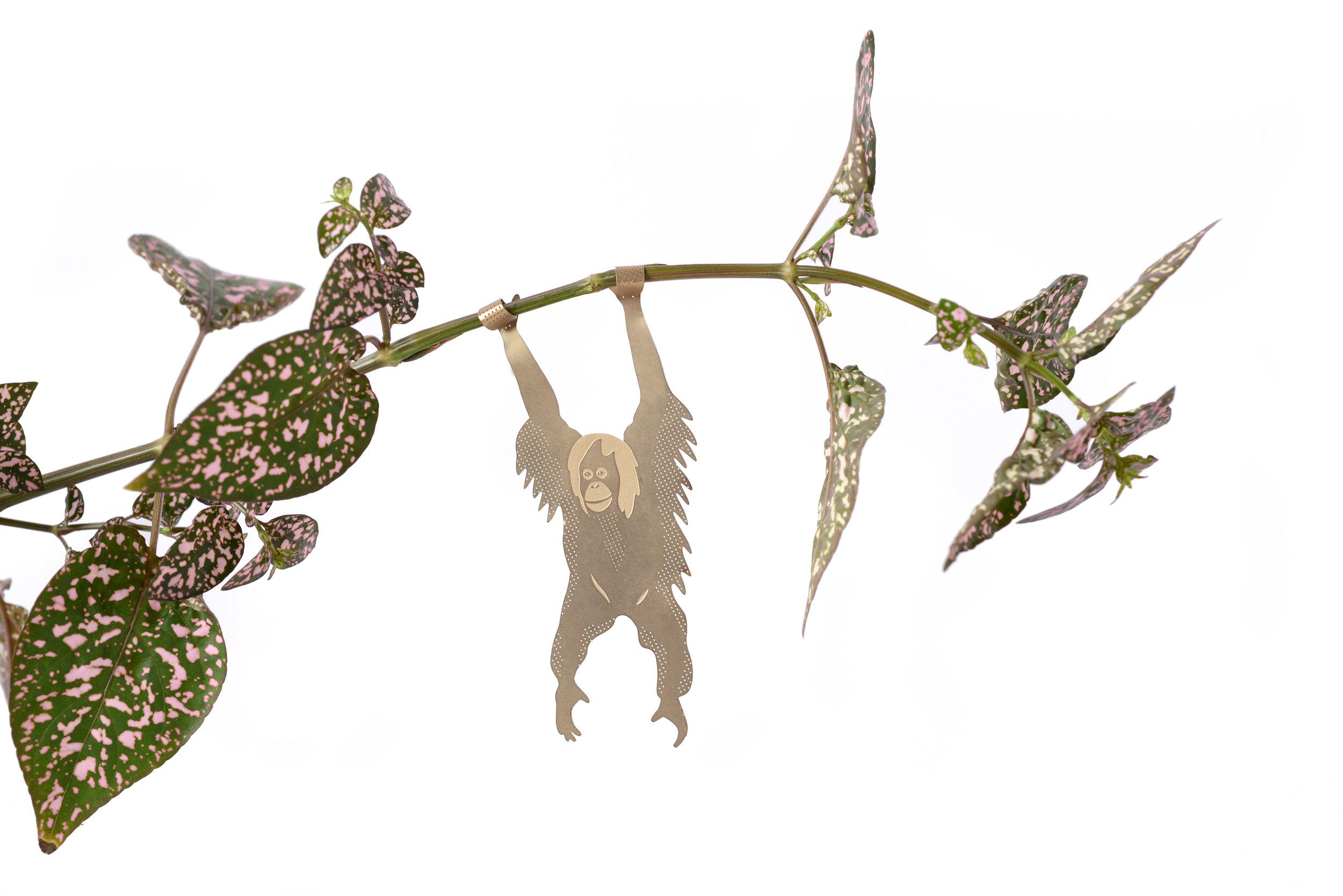 orangutan-white-plants.jpg
