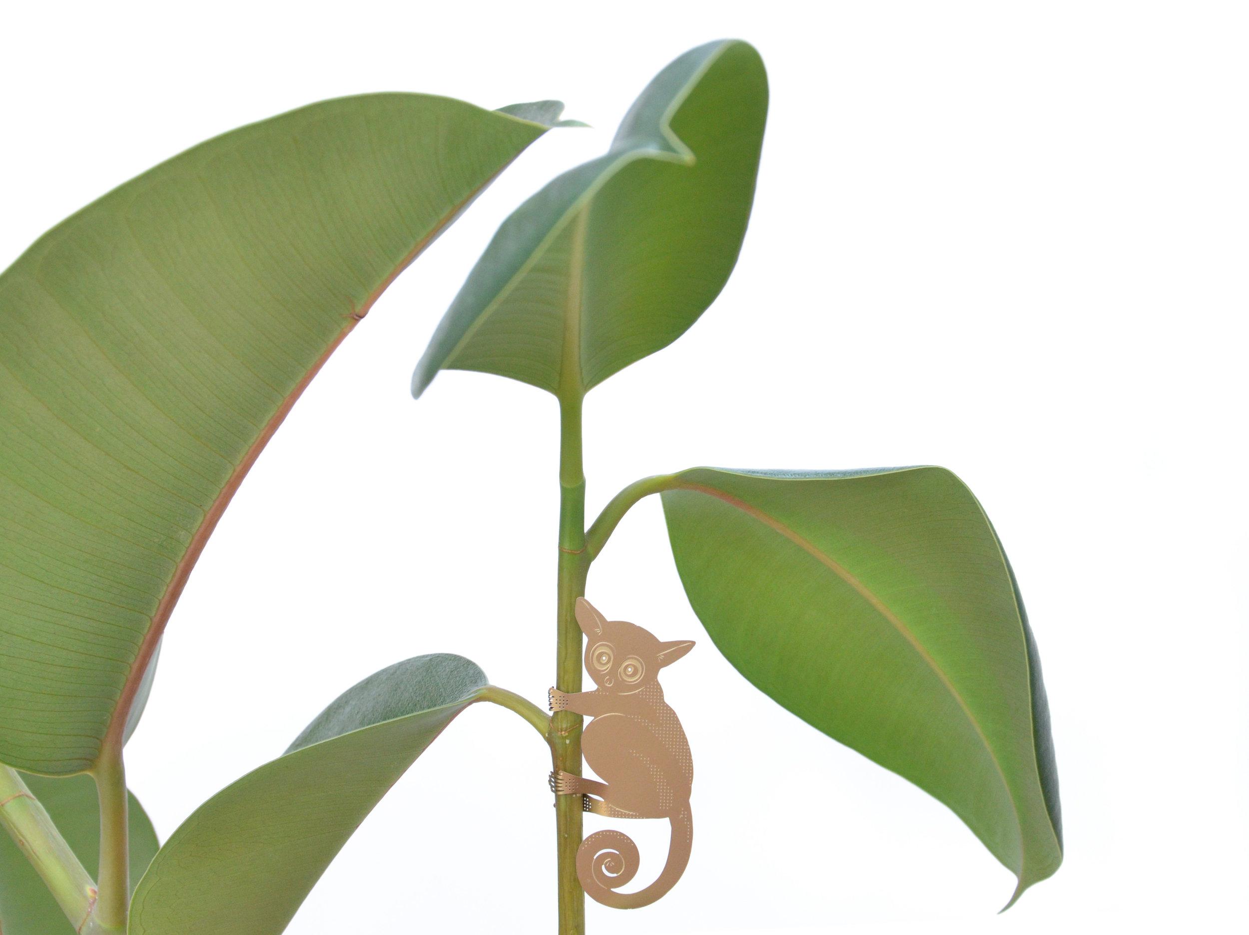 bush-baby-plant-animal.jpg