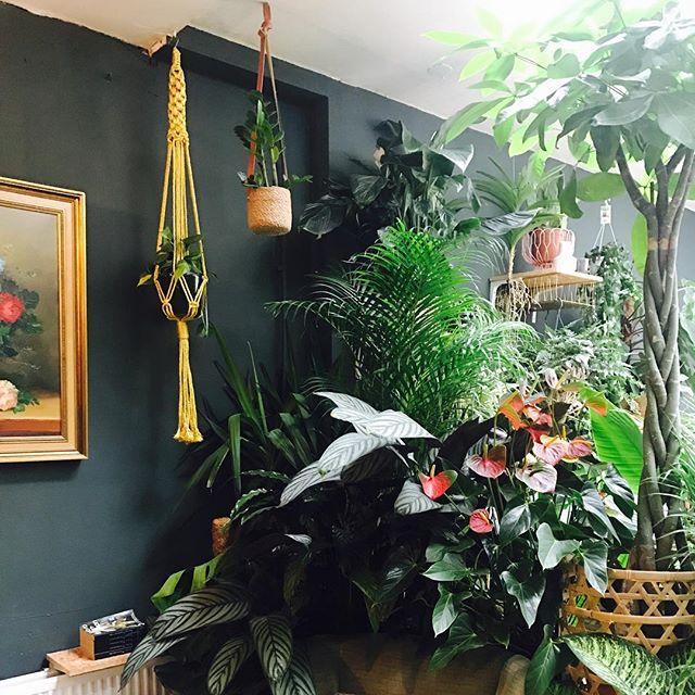 filya plant store.jpg