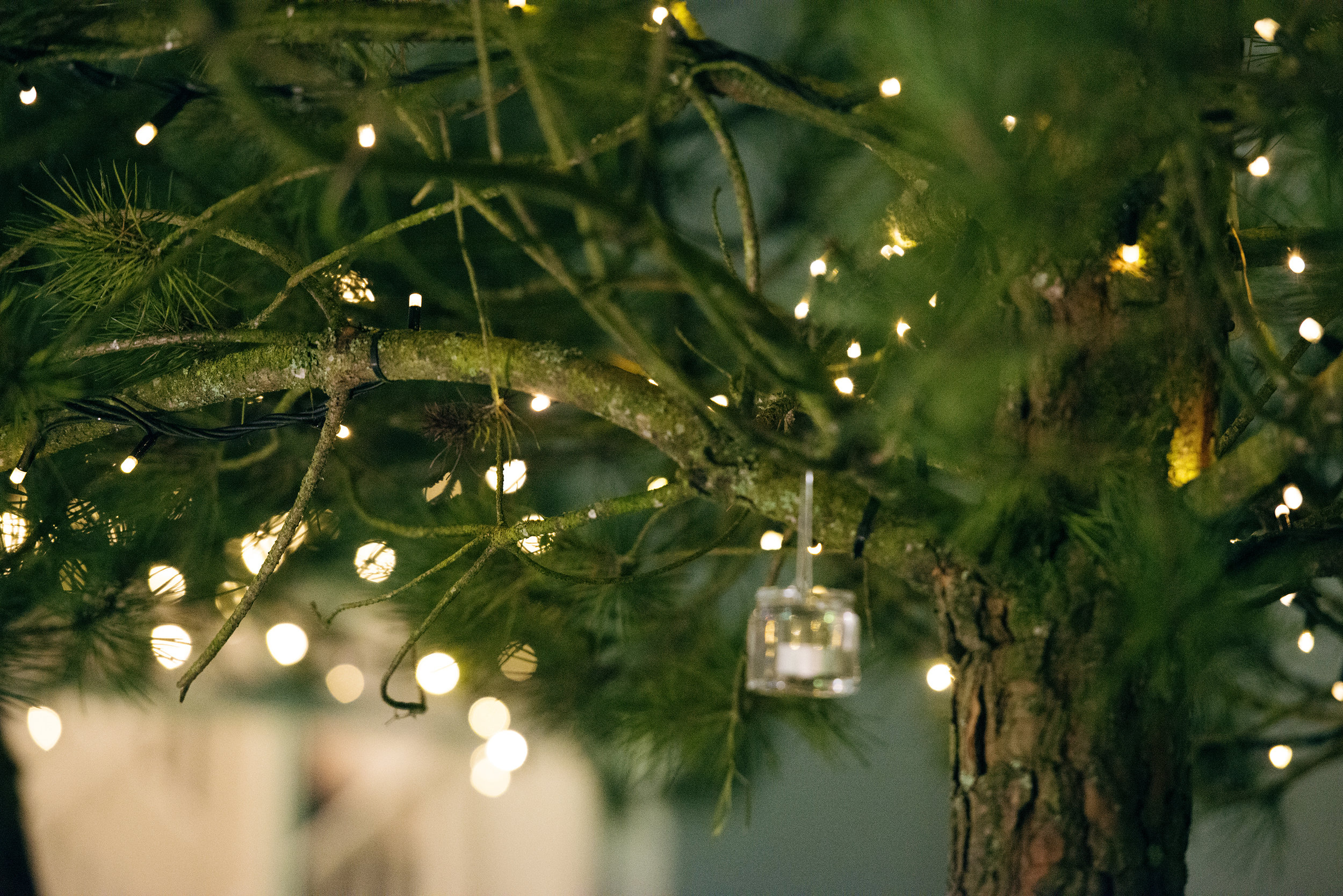 Tulfarris Hotel & Golf Resort lights in a tree wedding.jpg
