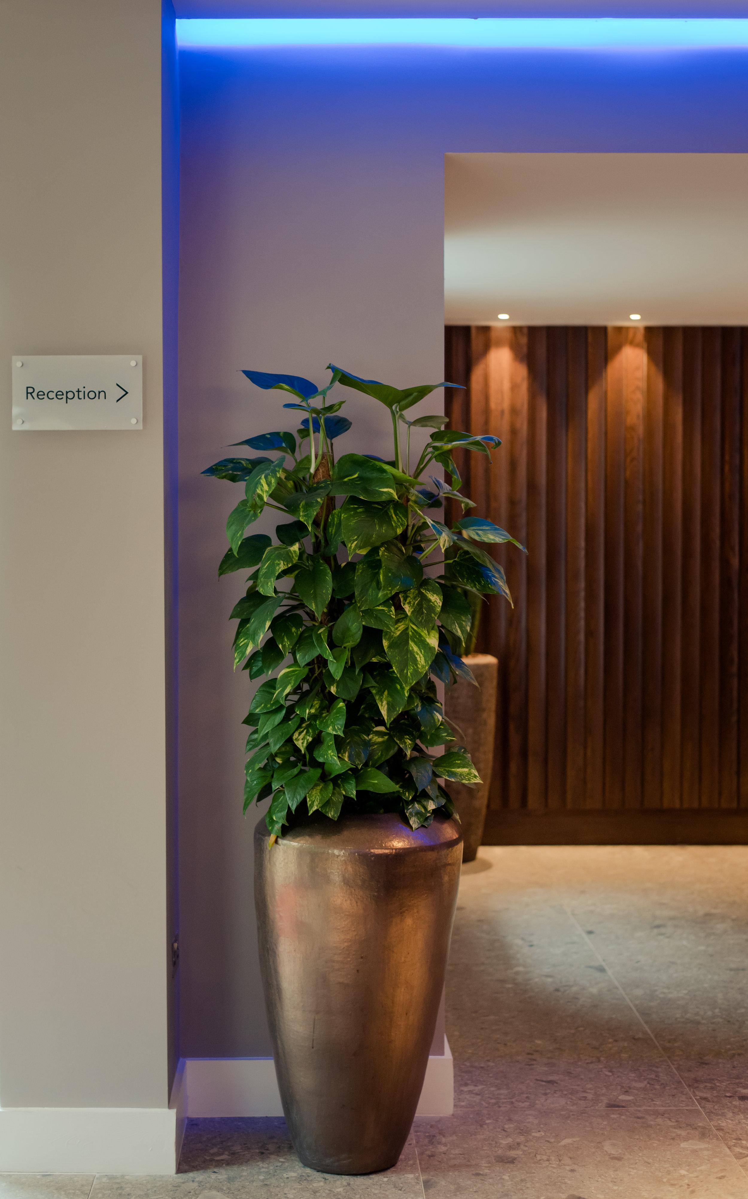 Tulfarris Hotel & Golf Resort lobby plant.jpg