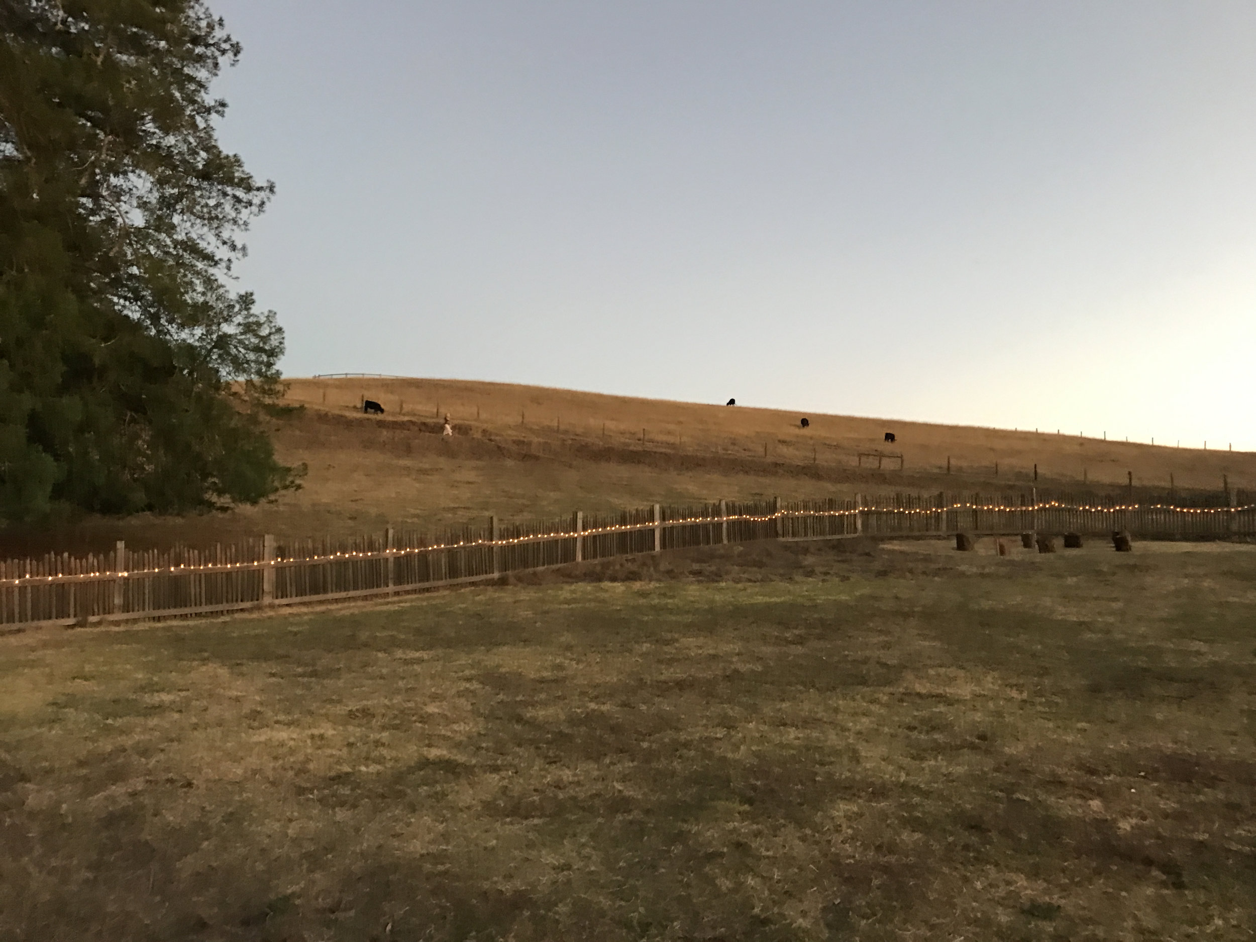 The jagged wooden fence that surrounds the ranch grounds.