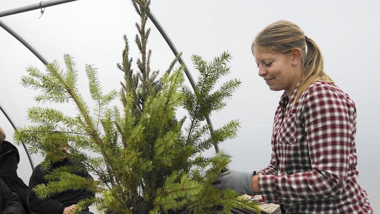 Sarah Goers Johnson teaches a class on winter arrangements. (Mike Mantucca / Pioneer Press)