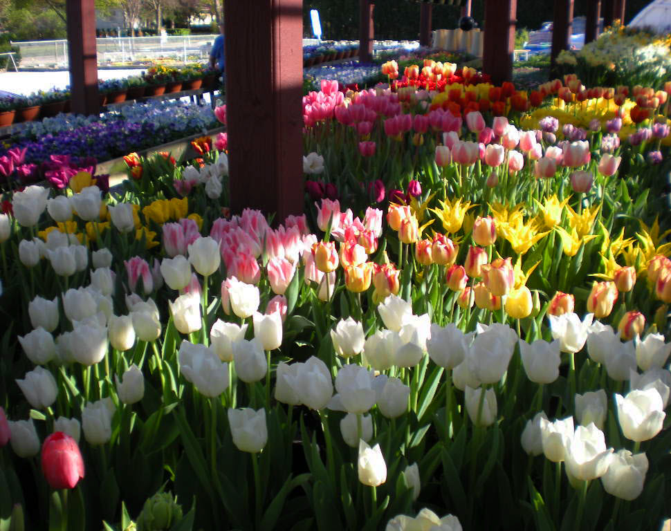 spring+at+ghouse+026.jpg