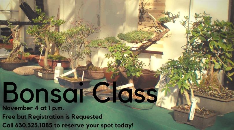 Bonsai Class.jpg