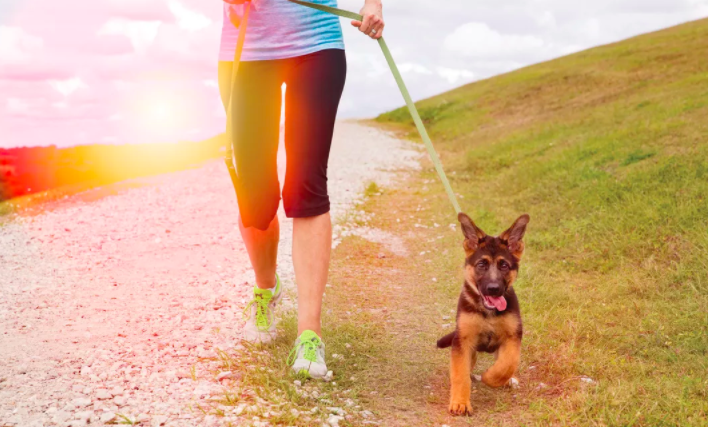 This dog is enjoying the trails at the Celery Fields. Photo credit: Sarasota Magazine